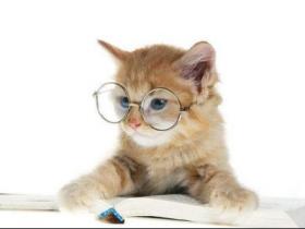 猫咪除了会近视、会过敏,还有哪些你想不到的?