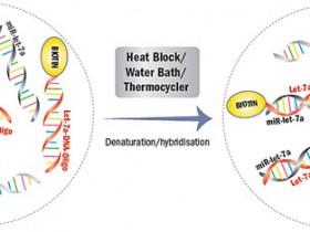 miRNA绝对定量的新方法——miRNA酶联免疫分析(miREIA)