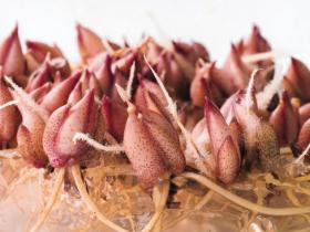 Gamborg B5植物组织培养基一站式解决方案
