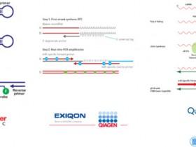 双尾RT-qPCR——超高灵敏度和特异性miRNA定量方法