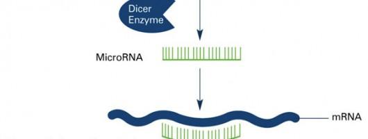 真的能提取完整microRNAs(< 200 nt)吗?Nature都知道