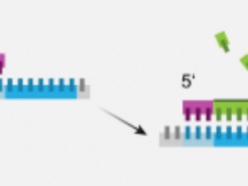 别具一格的TdT末端转移酶