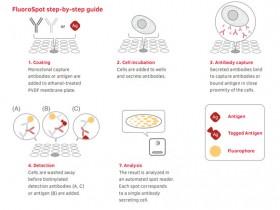 B细胞FluoroSpot检测——免疫球蛋白的有力检测工具