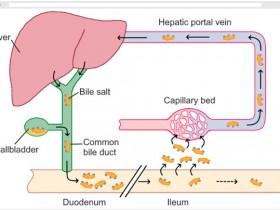 众多高分文章引用丨超敏小鼠总胆汁酸TBA 试剂盒爆款来袭!