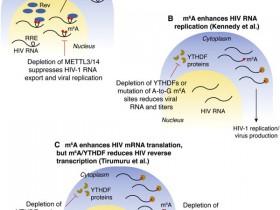 SARS-CoV-2药物研究新靶点,就在你身边!