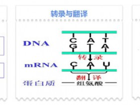 His-TagProtein ELSIA试剂盒,专业助力His标签蛋白定量