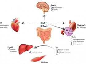 众多高分文章引用的胰高血糖素样肽-1ELISA 试剂盒,选它!