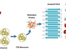 多样本类型转甲状腺素蛋白检测试剂盒解决方案