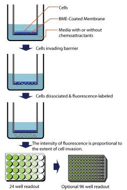 CultrexCoat 细胞侵袭BME浓度优化选择试剂盒