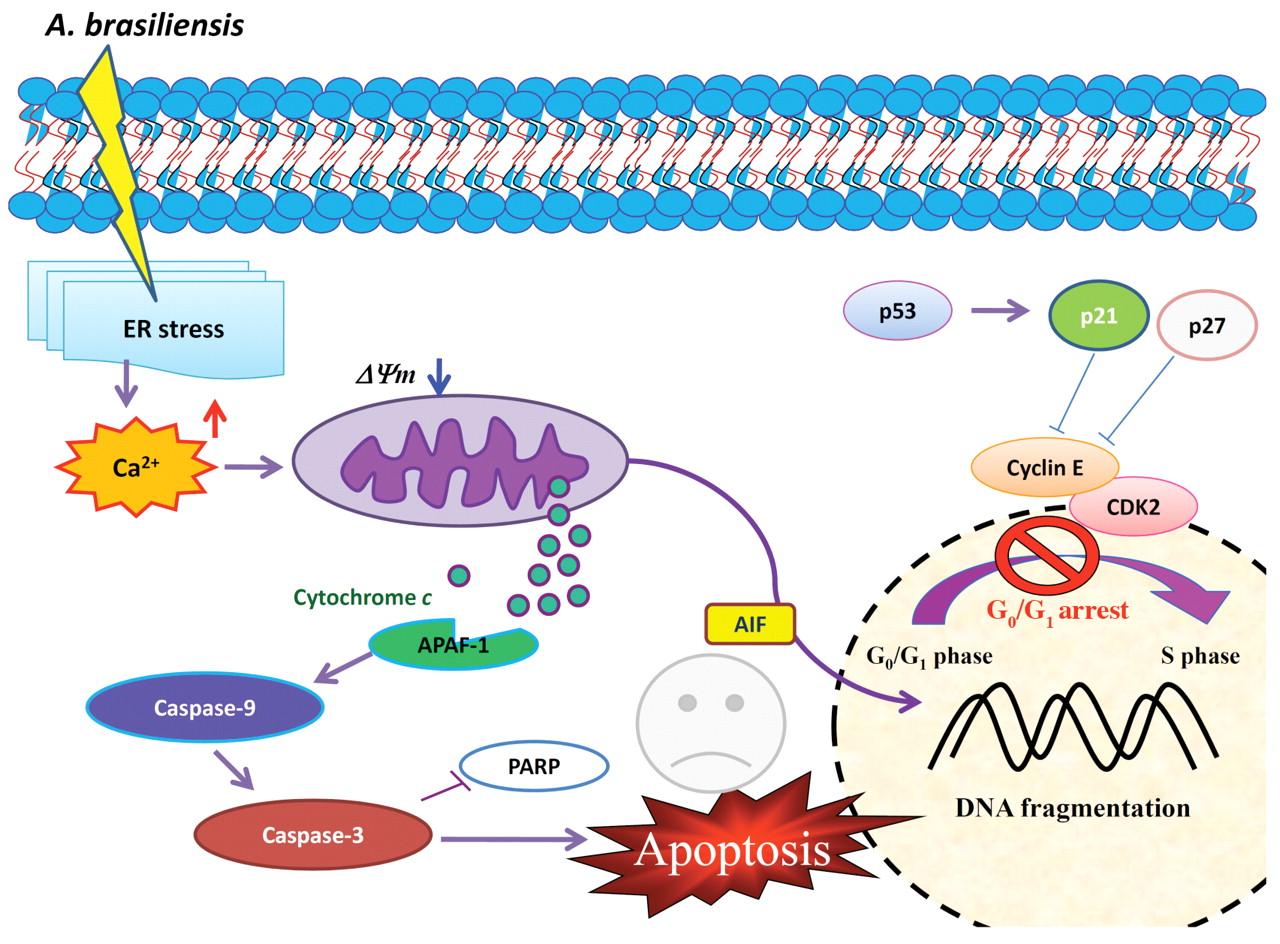 PARP活性分析试剂盒—细胞凋亡PARP研究工具