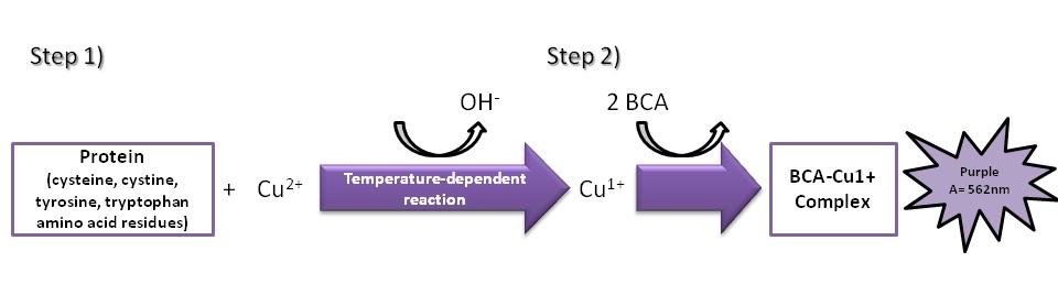 bca蛋白定量方案—最便宜的bca蛋白定量分析试剂盒