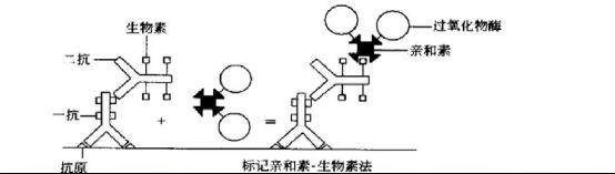 biotin-LBA