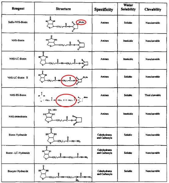 biotin-reagent