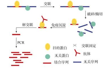 核酸-蛋白质互作的研究方法简介