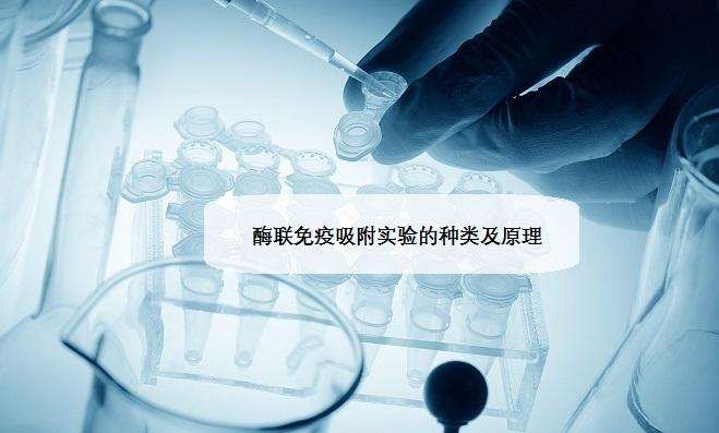 酶联免疫吸附实验的种类及原理