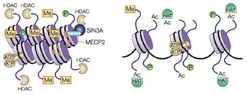 HDAC-figure