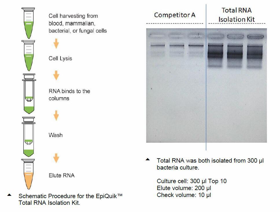 rna-kit-process