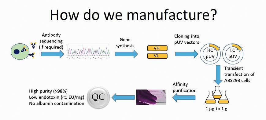 Abnova重组抗体生产流程示意图