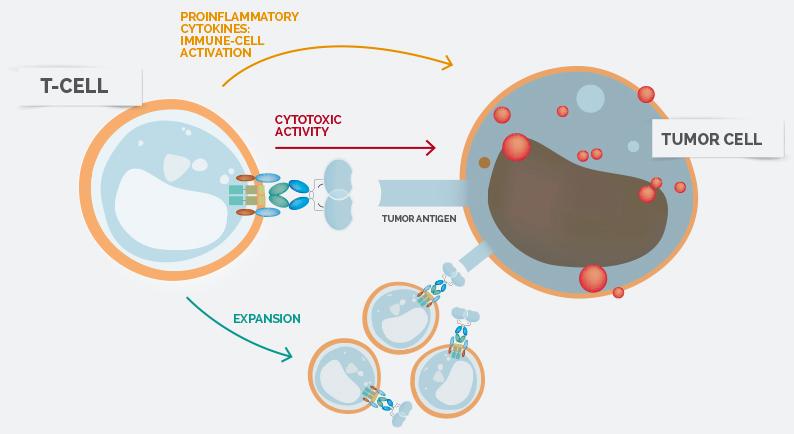 CAR-T细胞免疫疗法