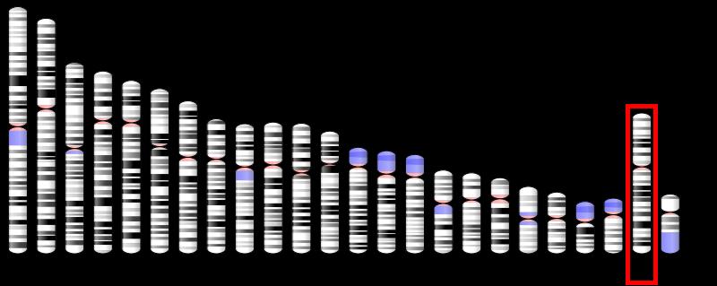 CD99基因在染色体上的定位