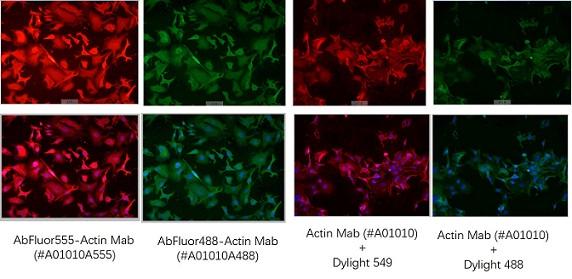 AbFluor 直标抗体与传统一抗+二抗结果对比