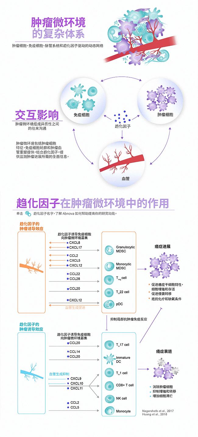 肿瘤微环境中的复杂体系