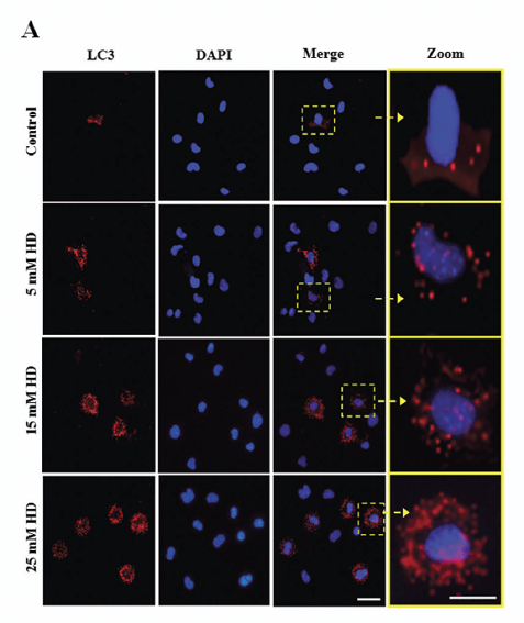 VSC41-cells