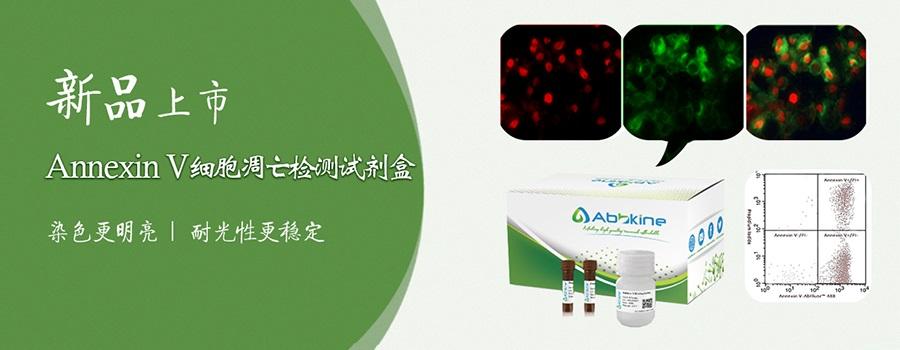 Abbkine新品上市:Annexin V细胞凋亡检测试剂盒