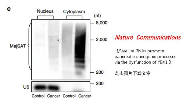 细胞质和细胞核RNA提取试剂盒