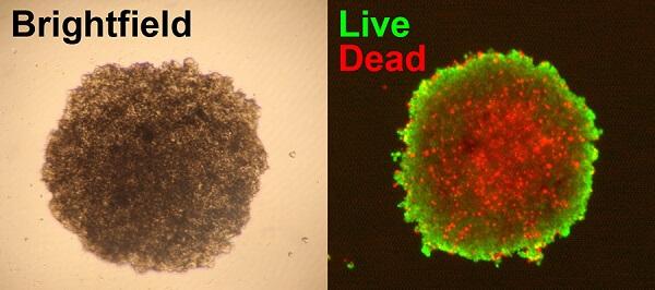 活细胞,死细胞