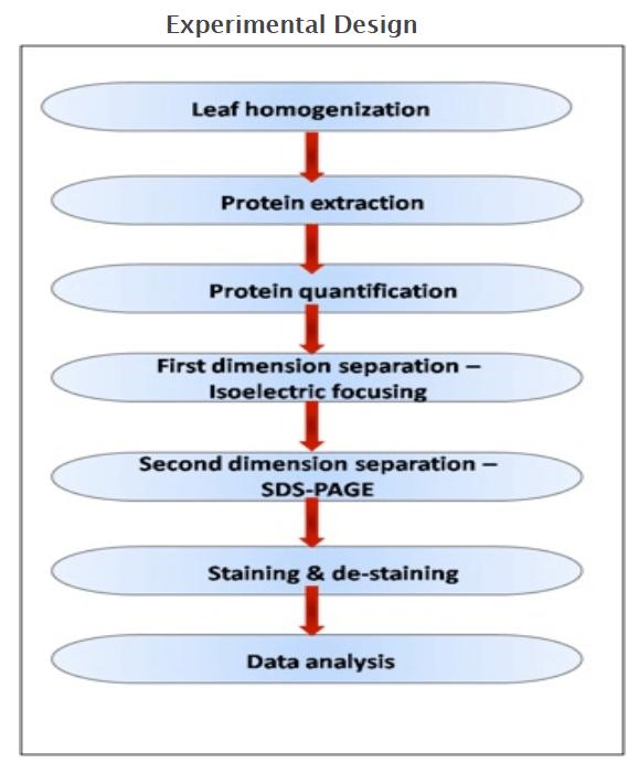 植物蛋白质组学研究凝胶电泳方法