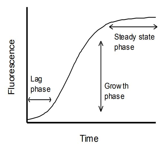 actin聚合的三个阶段