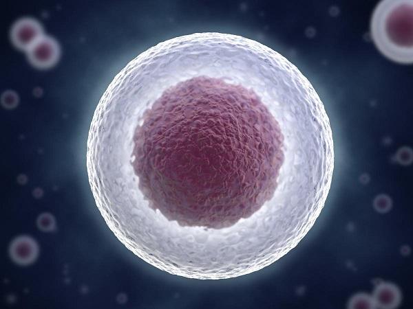 细胞核cell nucleus