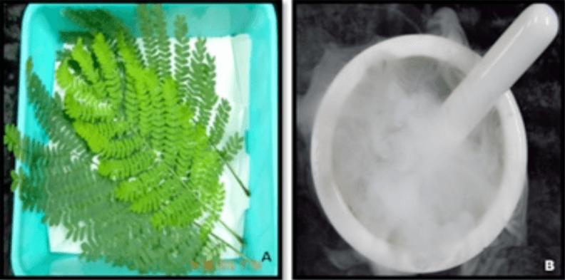 藻类样本 蛋白提取