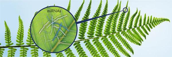 植物microRNA