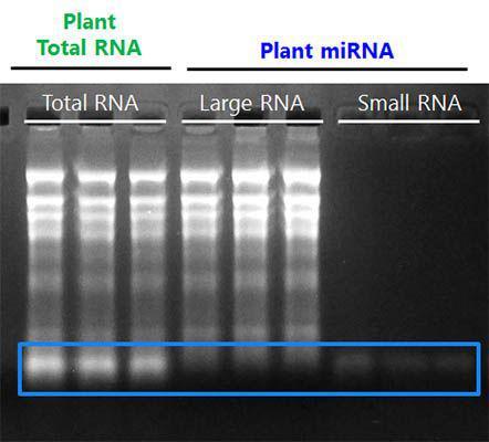 大小RNA的分级提取