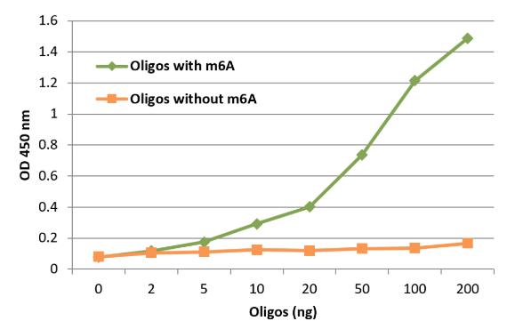 RNA甲基化抗体,m6A抗体elisa检测表现