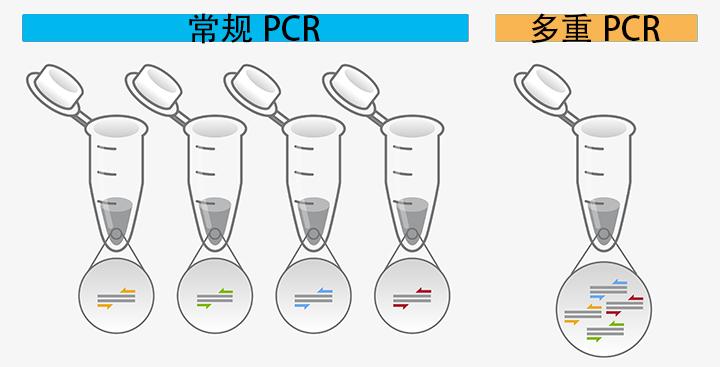 多重PCR试剂盒