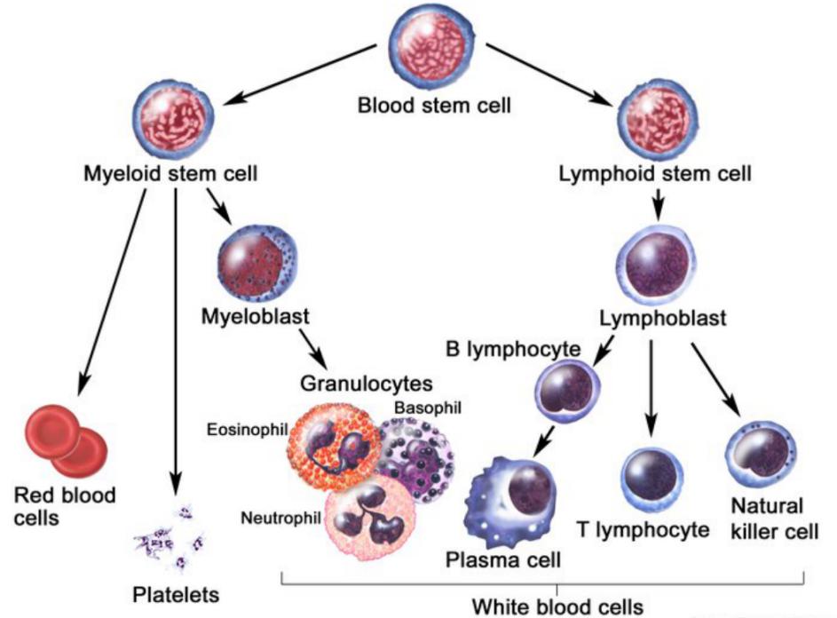 白细胞RNA提取