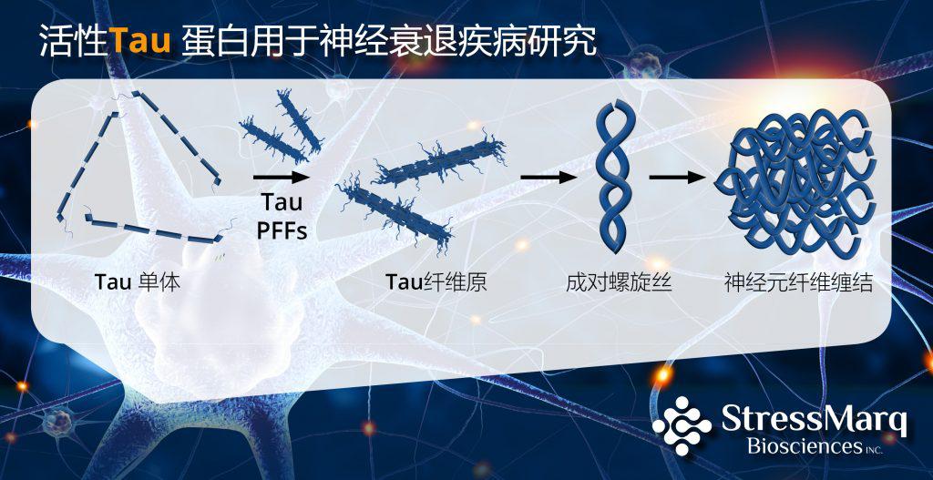 活性Tau蛋白