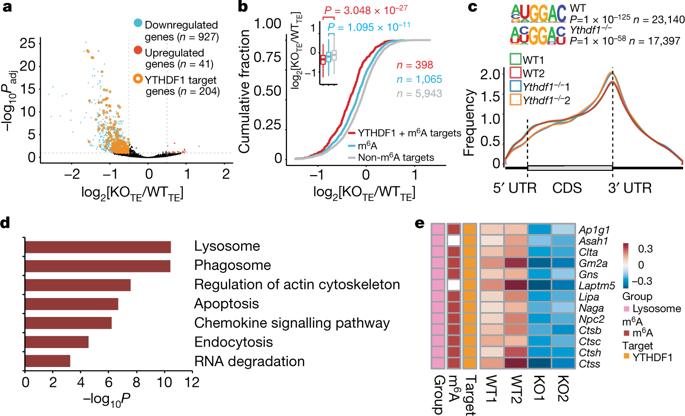 RNA m6A