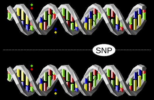 TERMIPol-DNA聚合酶 SNP