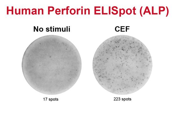人穿孔素ELISpot试剂盒(ALP)