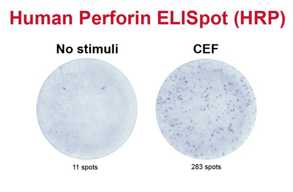 人穿孔素ELISpot试剂盒(hrp)