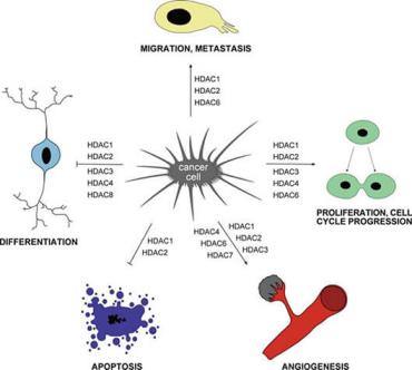 组蛋白去乙酰化酶抑制剂