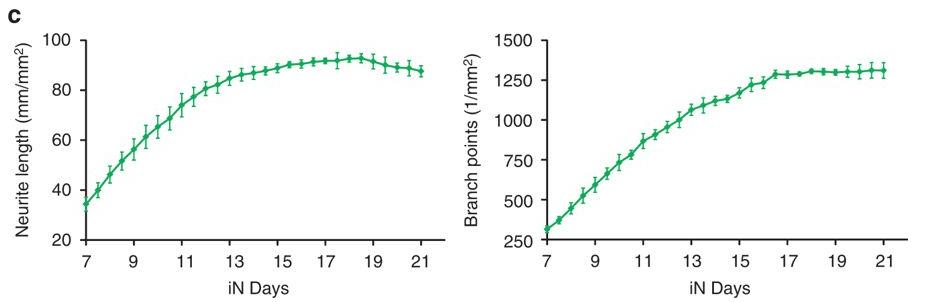 人诱导神经元(INS)分化过程0-21天的活细胞成像