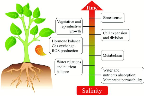 植物环境压力-盐胁迫