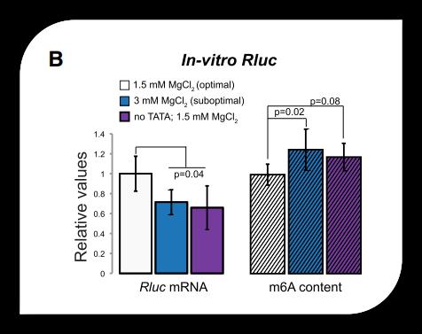 m6A RNA 定量