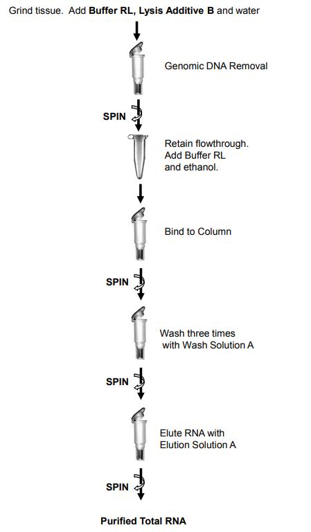 脂肪组织RNA提取纯化试剂盒操作流程