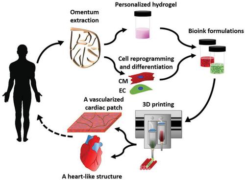 生物评论周报第76期:Advanced Science:重磅!使用人体组织3D打印全球首个完整心脏!